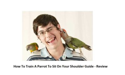 How To Train A Parrot To Sit On Your Shoulder Guide - Review