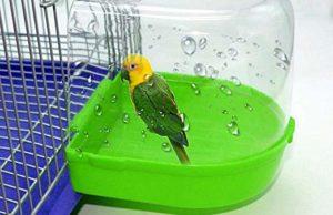 parrot-bath
