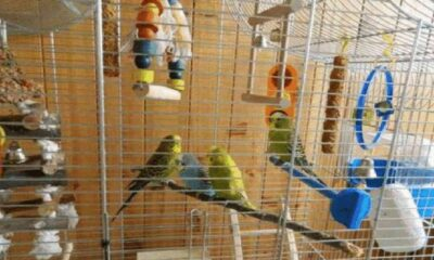 3 Best Selling Parrot Cages
