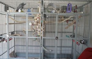 Parrot Bird Cages