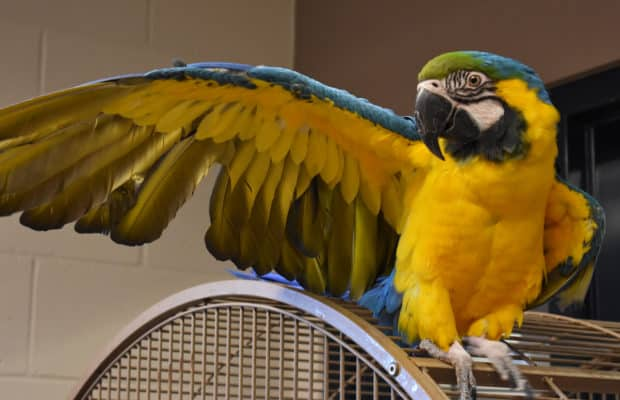 Lovely Macaw Cages