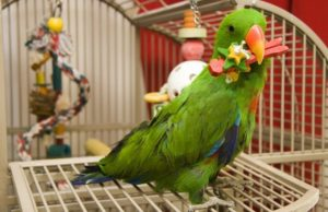 Best Stainless Steel Bird Cages