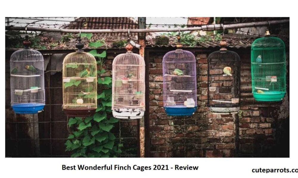 Best Wonderful Finch Cages 2021 - Review