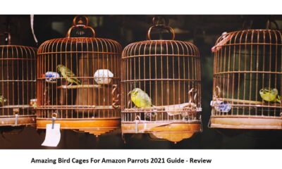 Best Bird Cages 2021 - Review