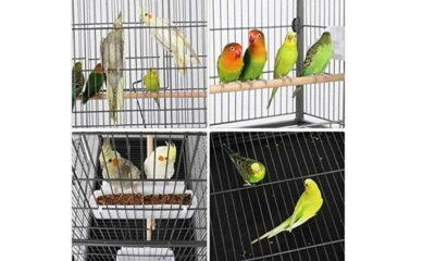 Top Best Bird Cages 2021 Guide - Review