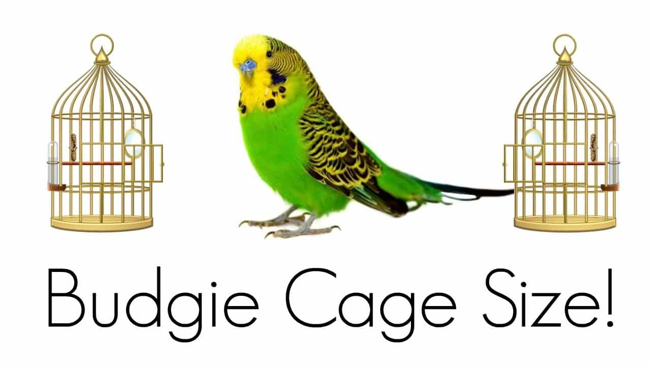 What Size Should Be Your king Bird Cage?
