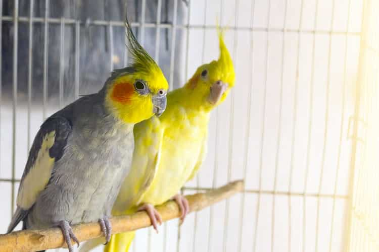 What About The Shape Of King Cage For Your Bird?