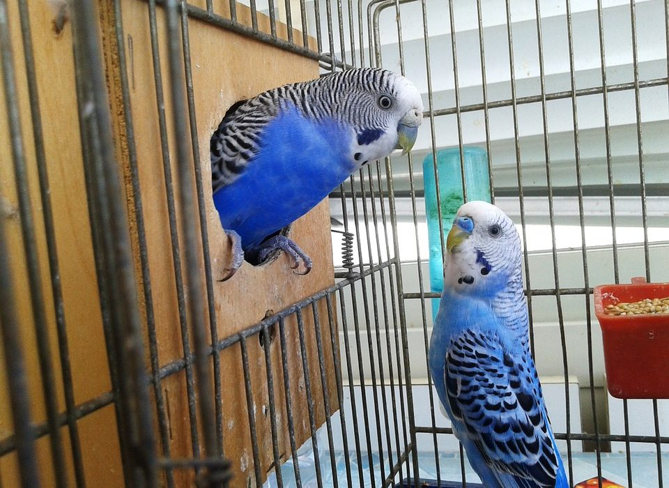 Place Your Parrot in Cage